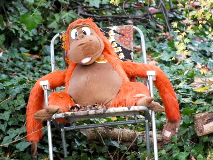 Lazy Orangutan in Bedford Park