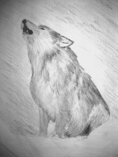 """Howling Wolf"" - Pencil illustration by Hannah Sterry"